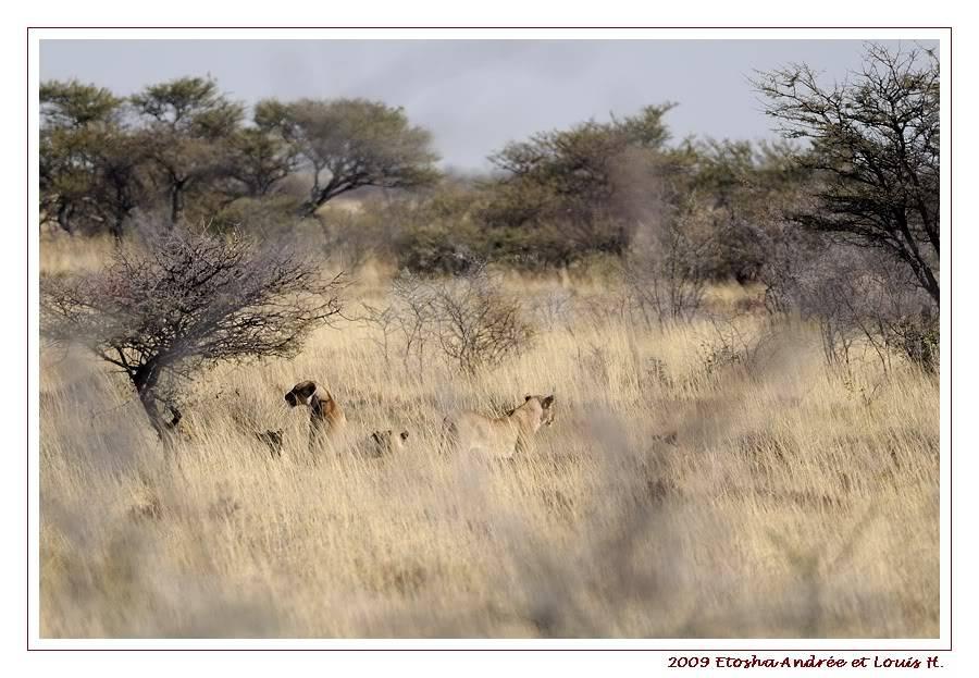 Aventures en Namibie Partie 2 : De Walvis Bay à Etosha _DSC6879pf