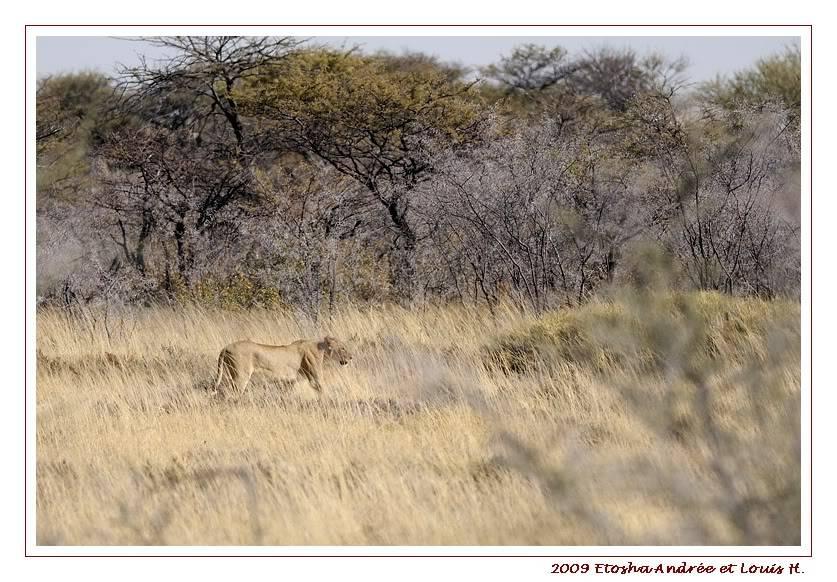 Aventures en Namibie Partie 2 : De Walvis Bay à Etosha _DSC6884pf