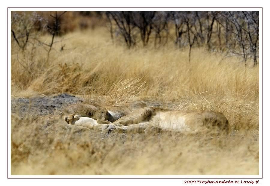 Aventures en Namibie Partie 2 : De Walvis Bay à Etosha _DSC6904pf