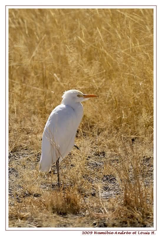 Aventures en Namibie Partie 2 : De Walvis Bay à Etosha _DSC6909