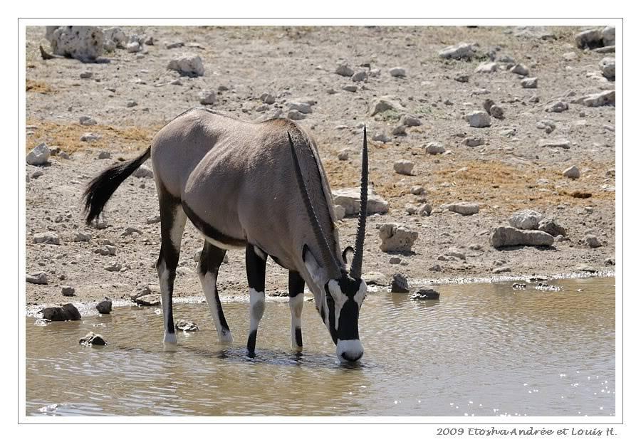 Aventures en Namibie Partie 2 : De Walvis Bay à Etosha _DSC6966pf