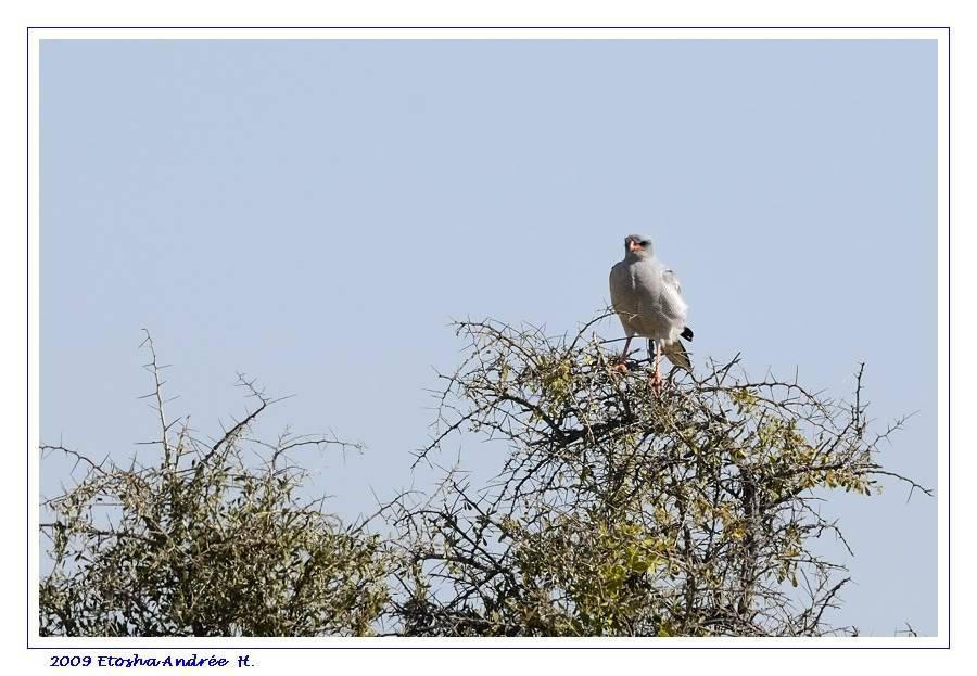 Aventures en Namibie Partie 2 : De Walvis Bay à Etosha _DSC6972pf