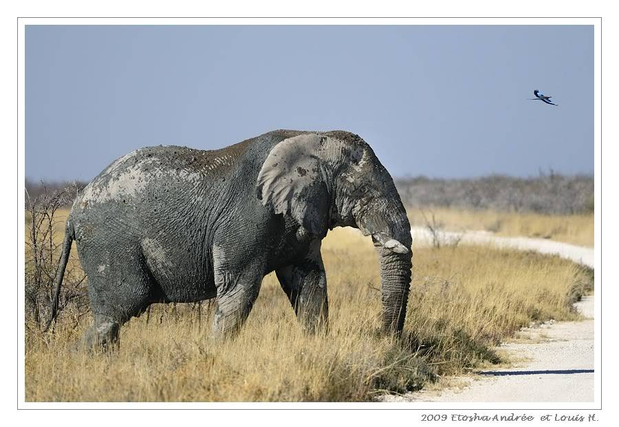 Aventures en Namibie Partie 2 : De Walvis Bay à Etosha _DSC7000pf