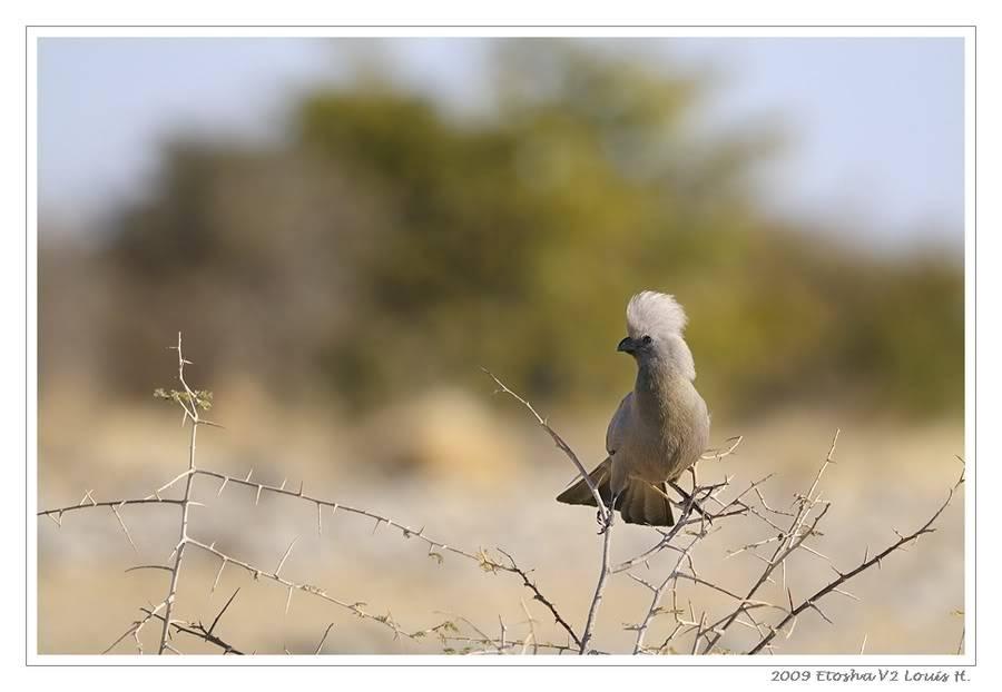 Aventures en Namibie Partie 2 : De Walvis Bay à Etosha _DSC7023PF2