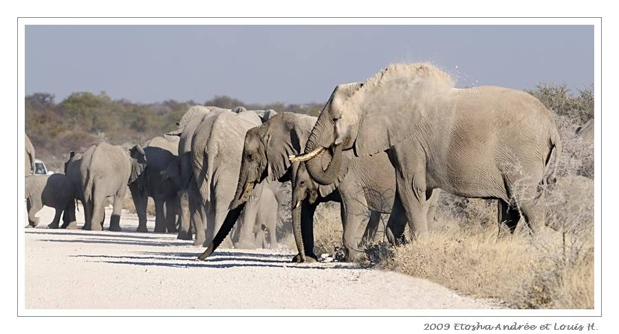 Aventures en Namibie Partie 2 : De Walvis Bay à Etosha _DSC7033pf