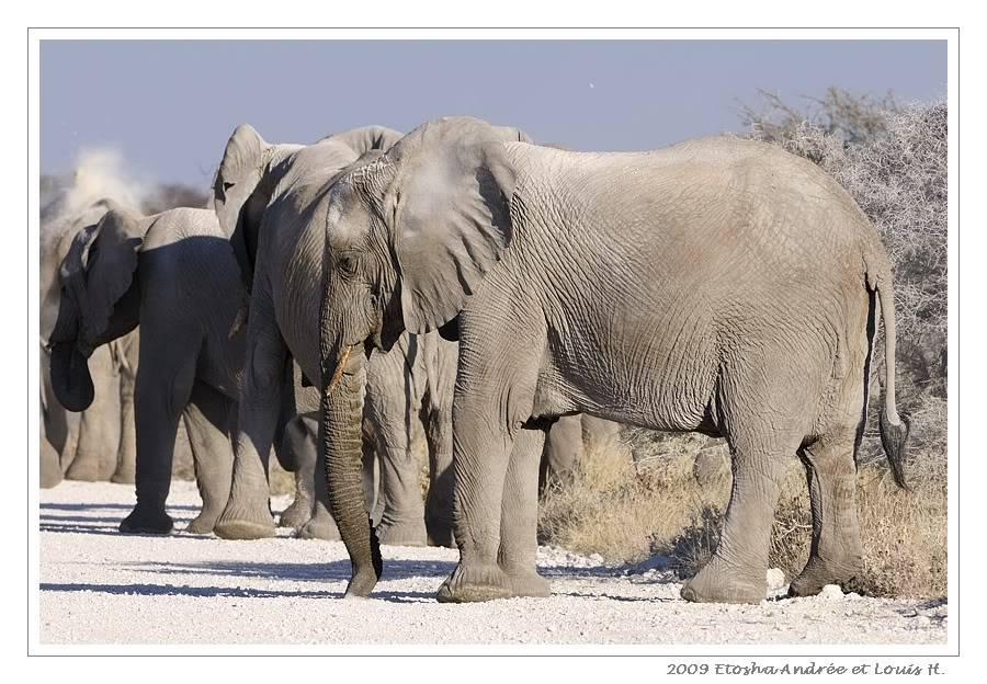 Aventures en Namibie Partie 2 : De Walvis Bay à Etosha _DSC7034pf
