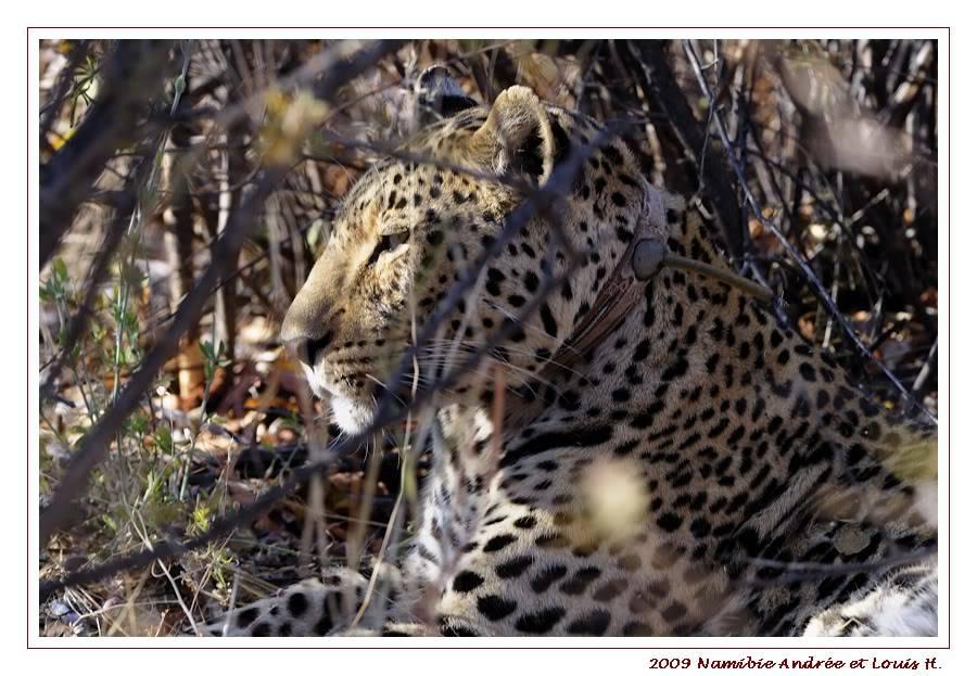 Aventures en Namibie Partie 2 : De Walvis Bay à Etosha _DSC7076PF