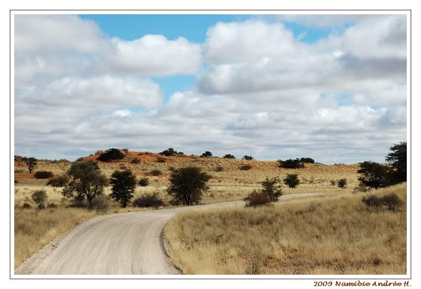 Aventures en Namibie Partie 1: De Windhoek à Sossusvlei DSC_9129Kgalagadi800