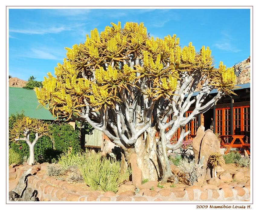 Aventures en Namibie Partie 1: De Windhoek à Sossusvlei DSC_9262