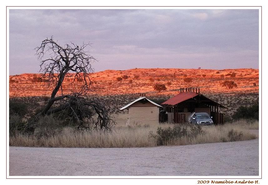 Aventures en Namibie Partie 1: De Windhoek à Sossusvlei IMG_0579Kgalagadi800