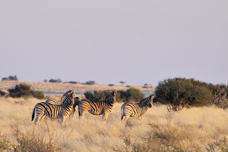 Aventures en Namibie Partie 1: De Windhoek à Sossusvlei _DSC5623