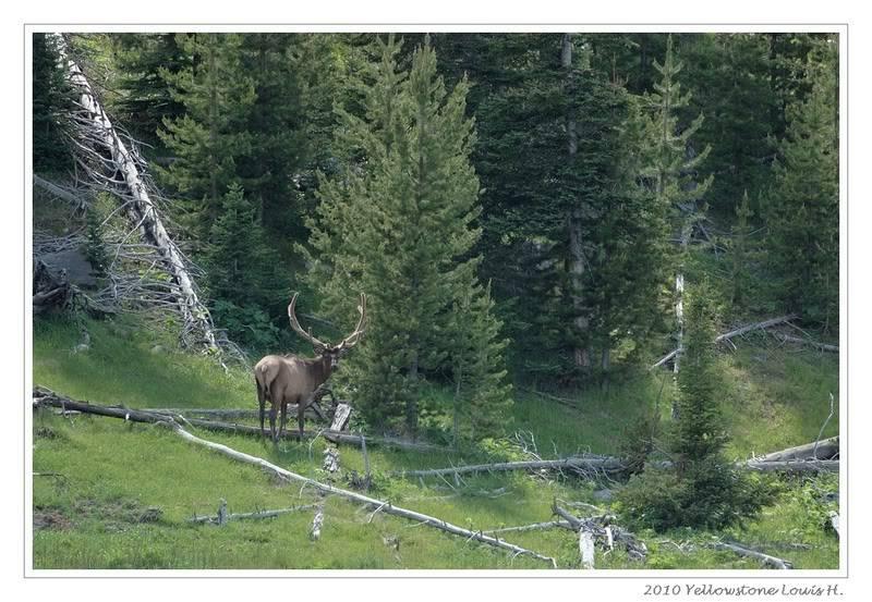 De Grand teton à Glacier en passant par Yellowstone: Partie 2 Yellowstone DSC_1458