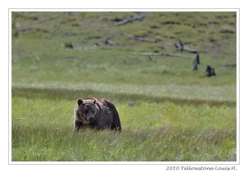 De Grand teton à Glacier en passant par Yellowstone: Partie 2 Yellowstone DSC_1488c-1