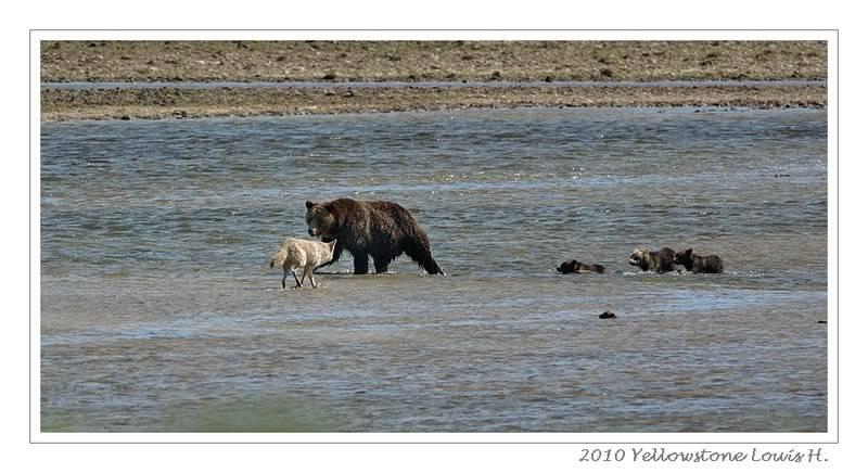 De Grand teton à Glacier en passant par Yellowstone: Partie 2 Yellowstone DSC_1666