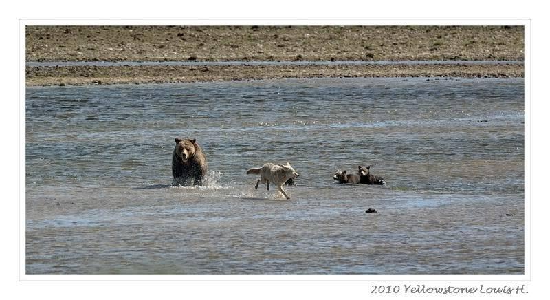 De Grand teton à Glacier en passant par Yellowstone: Partie 2 Yellowstone DSC_1667