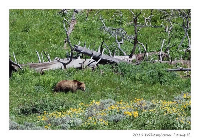 De Grand teton à Glacier en passant par Yellowstone: Partie 2 Yellowstone DSC_1728