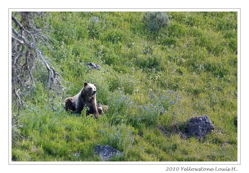 De Grand teton à Glacier en passant par Yellowstone: Partie 2 Yellowstone DSC_1878