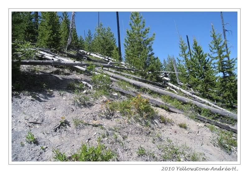 De Grand teton à Glacier en passant par Yellowstone: Partie 2 Yellowstone IMG_2301