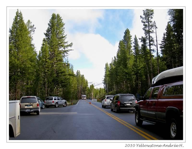 De Grand teton à Glacier en passant par Yellowstone: Partie 2 Yellowstone IMG_2599