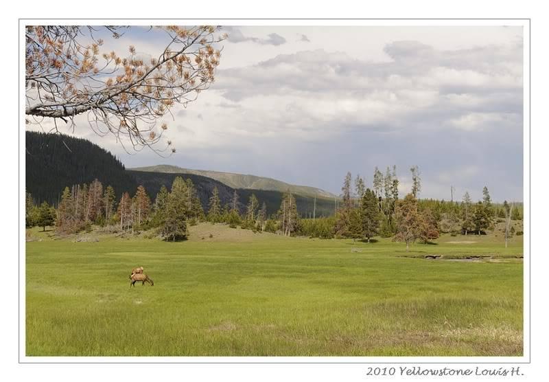 De Grand teton à Glacier en passant par Yellowstone: Partie 2 Yellowstone _DSC5959