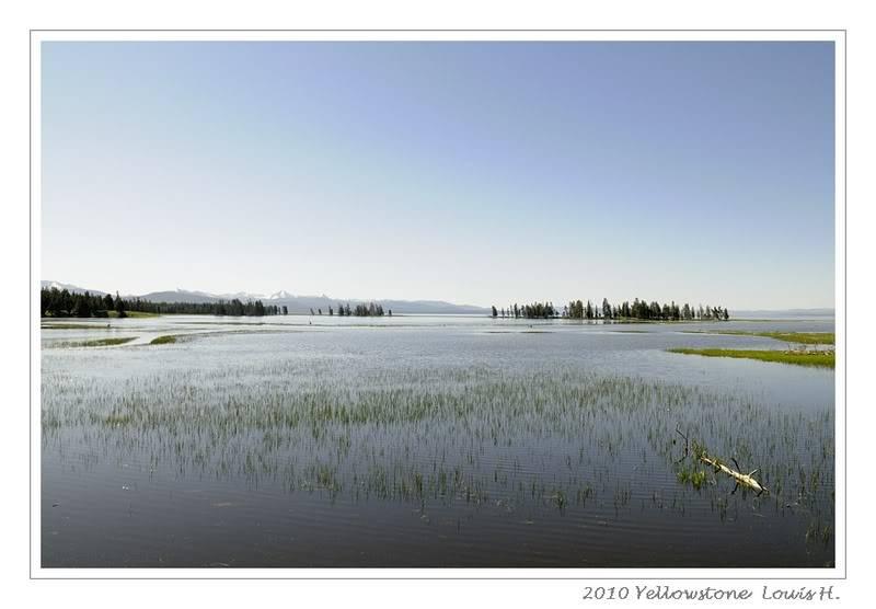 De Grand teton à Glacier en passant par Yellowstone: Partie 2 Yellowstone _DSC6285