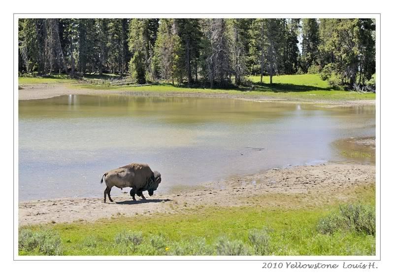 De Grand teton à Glacier en passant par Yellowstone: Partie 2 Yellowstone _DSC6301