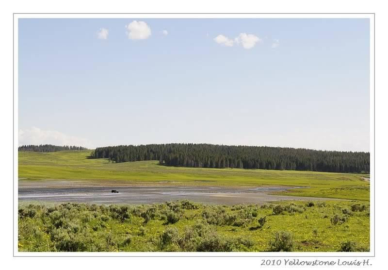 De Grand teton à Glacier en passant par Yellowstone: Partie 2 Yellowstone _DSC6353