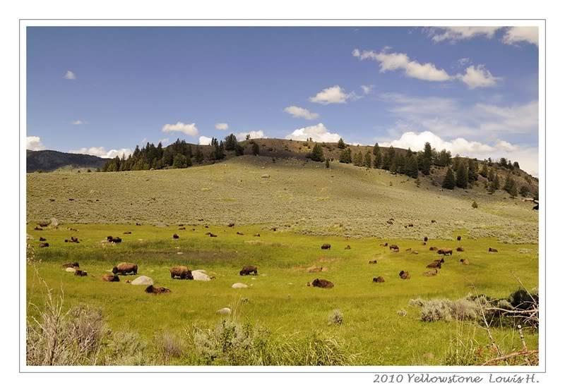 De Grand teton à Glacier en passant par Yellowstone: Partie 2 Yellowstone _DSC6413