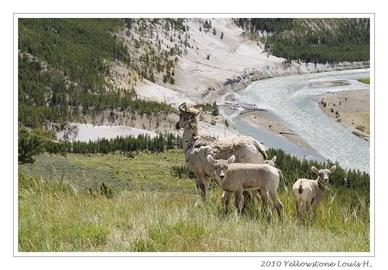 De Grand teton à Glacier en passant par Yellowstone: Partie 2 Yellowstone _DSC6457