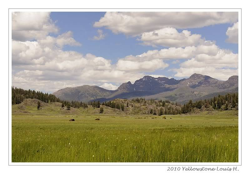 De Grand teton à Glacier en passant par Yellowstone: Partie 2 Yellowstone _DSC6475
