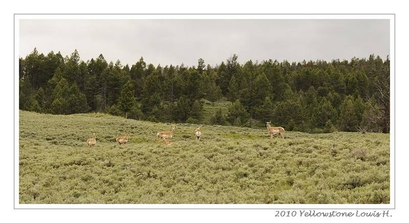 De Grand teton à Glacier en passant par Yellowstone: Partie 2 Yellowstone _DSC6501
