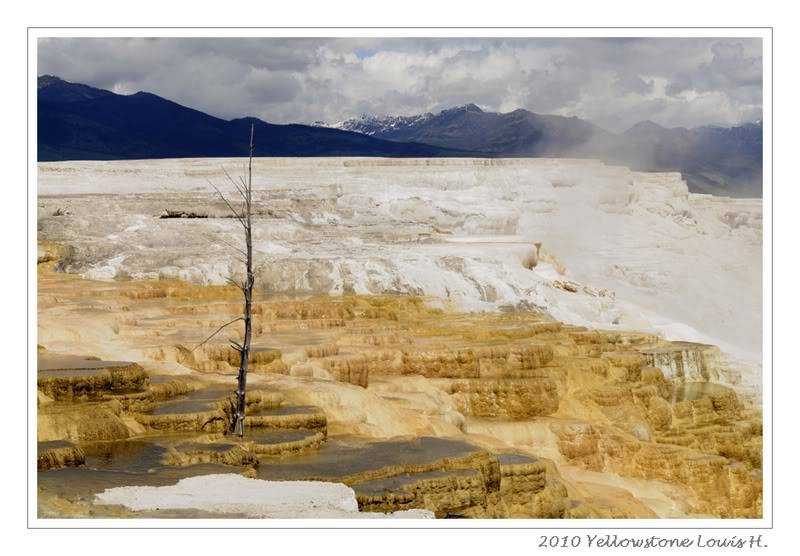 De Grand teton à Glacier en passant par Yellowstone: Partie 2 Yellowstone _DSC6658