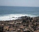 Aventures en Namibie Partie 2 : De Walvis Bay à Etosha Th_OTARIE