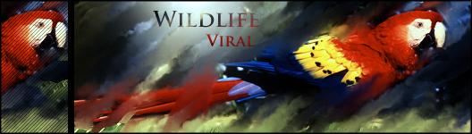 Viral sigs Wildlife