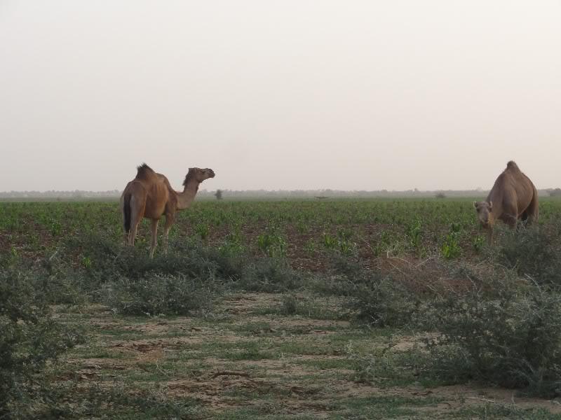 Memórias de África Central 2012 - 19Janeiro-02Fevereiro DSC01327