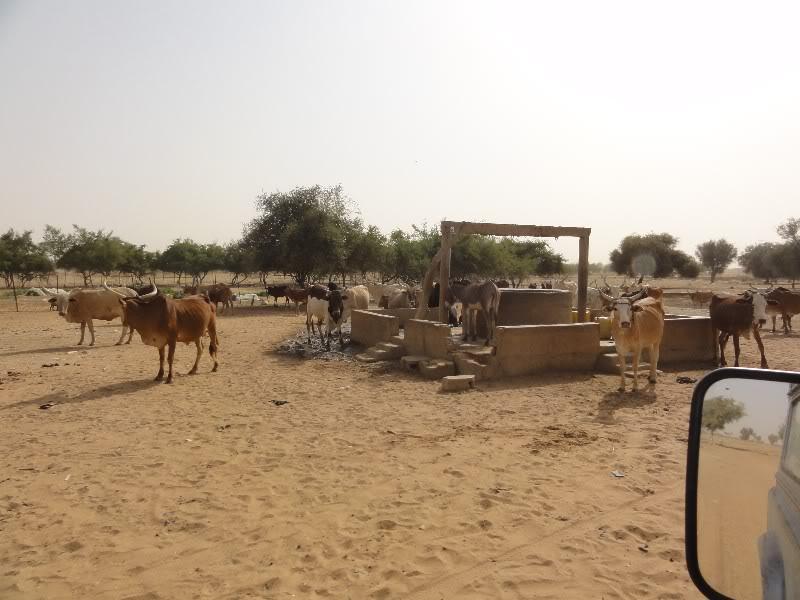 Memórias de África Central 2012 - 19Janeiro-02Fevereiro DSC01334