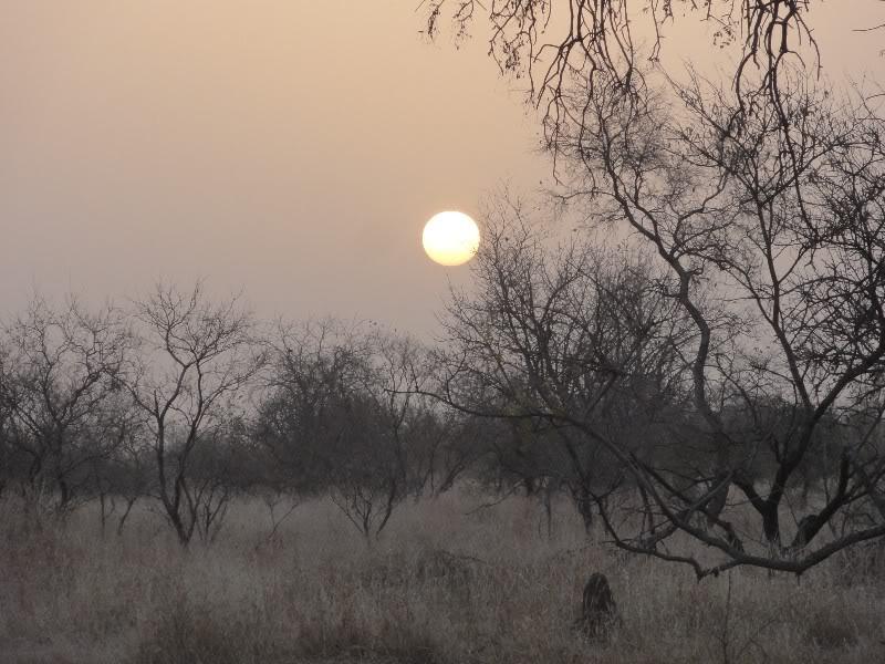 Memórias de África Central 2012 - 19Janeiro-02Fevereiro DSC01350