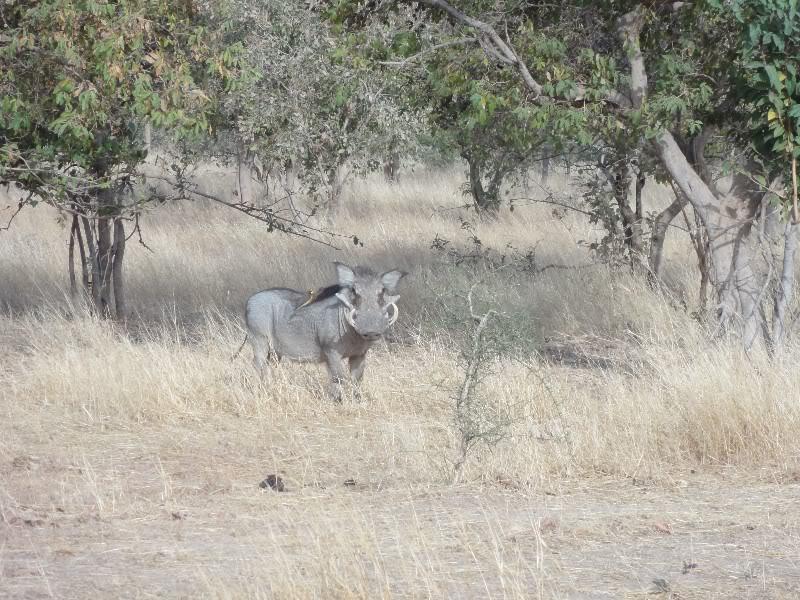 Memórias de África Central 2012 - 19Janeiro-02Fevereiro DSC01358-1