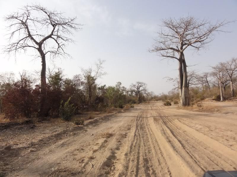 Memórias de África Central 2012 - 19Janeiro-02Fevereiro DSC01361
