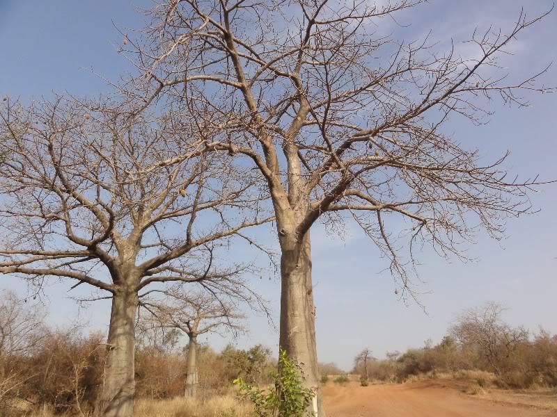 Memórias de África Central 2012 - 19Janeiro-02Fevereiro DSC01364