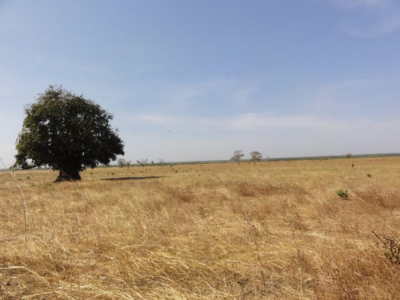 Memórias de África Central 2012 - 19Janeiro-02Fevereiro DSC01381