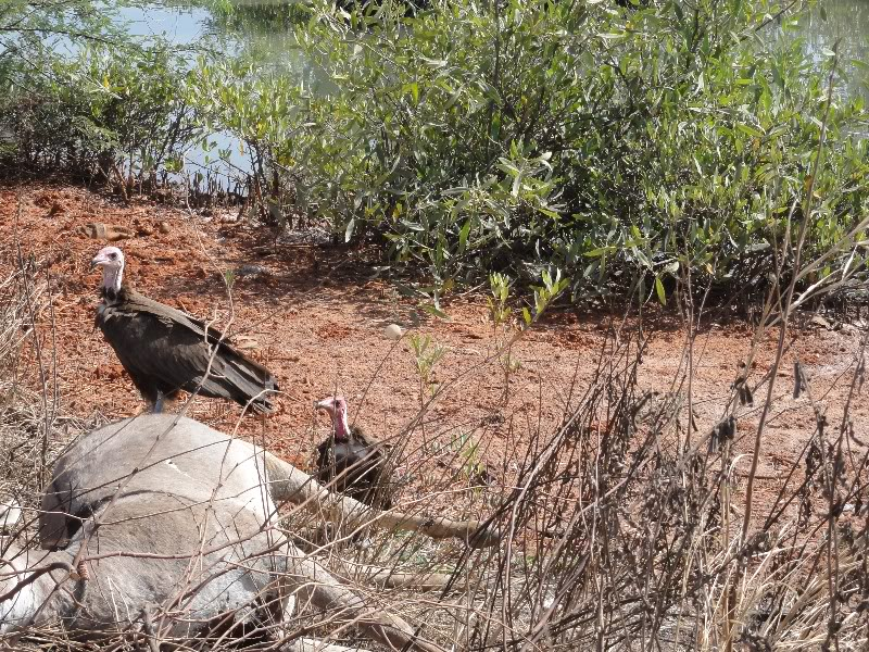 Memórias de África Central 2012 - 19Janeiro-02Fevereiro DSC01474