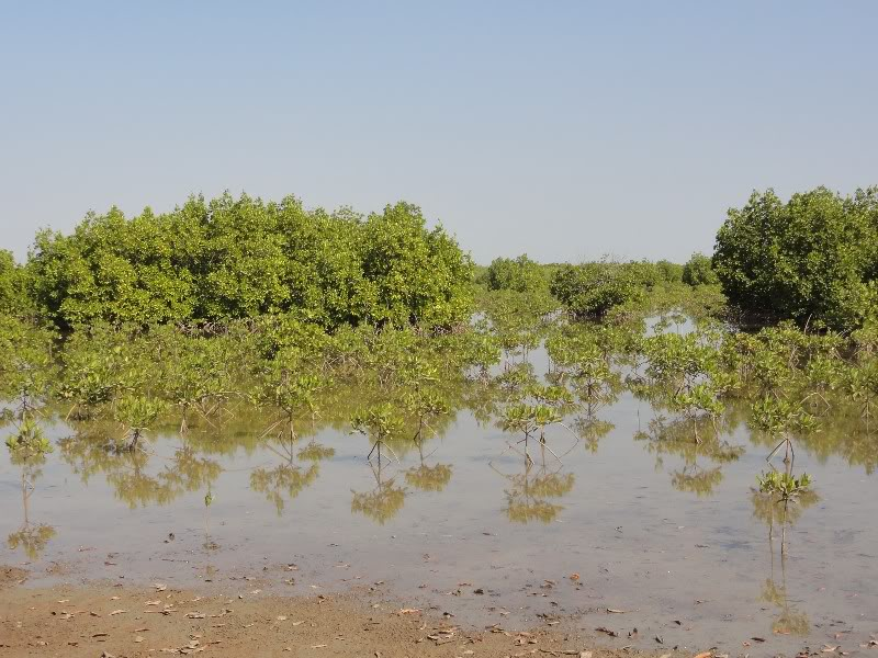Memórias de África Central 2012 - 19Janeiro-02Fevereiro DSC01477