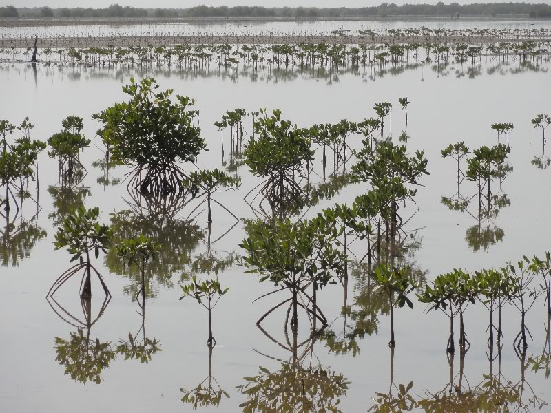 Memórias de África Central 2012 - 19Janeiro-02Fevereiro DSC01482-1
