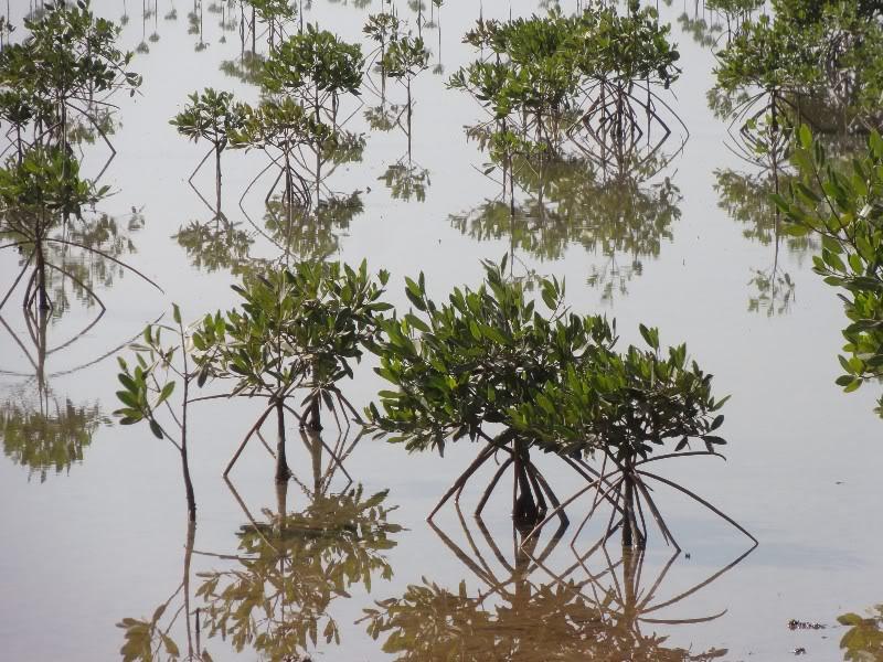 Memórias de África Central 2012 - 19Janeiro-02Fevereiro DSC01483