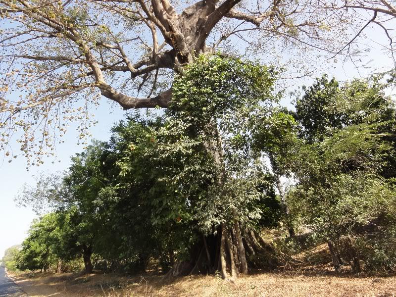 Memórias de África Central 2012 - 19Janeiro-02Fevereiro DSC01493