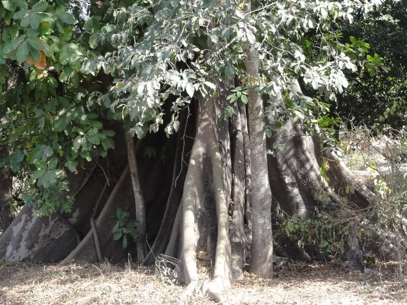 Memórias de África Central 2012 - 19Janeiro-02Fevereiro DSC01494