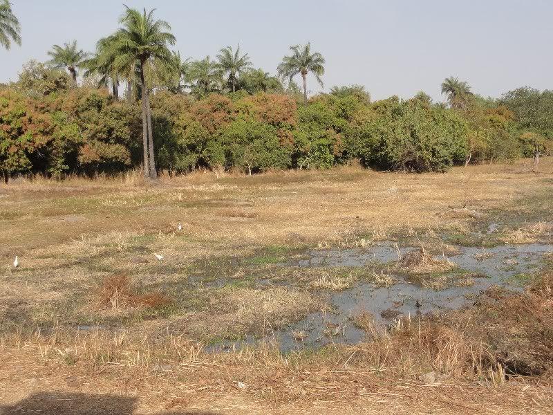 Memórias de África Central 2012 - 19Janeiro-02Fevereiro DSC01512