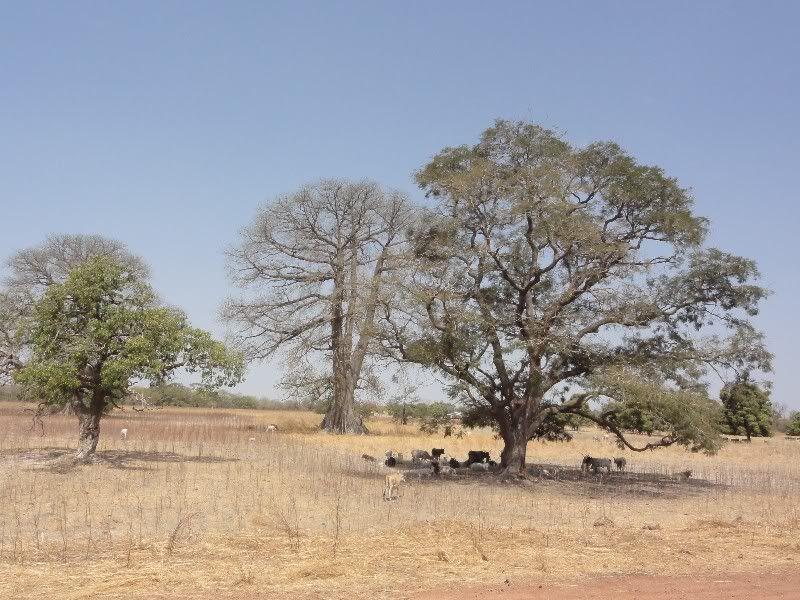Memórias de África Central 2012 - 19Janeiro-02Fevereiro DSC01518
