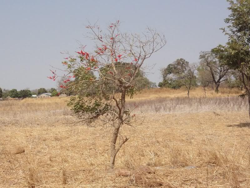 Memórias de África Central 2012 - 19Janeiro-02Fevereiro DSC01519
